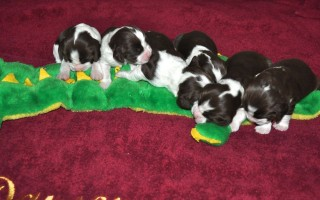 Vickie's Litter  8-5-13