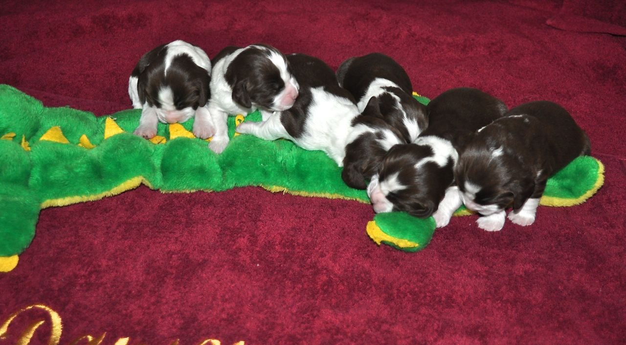 Vickie's Litter